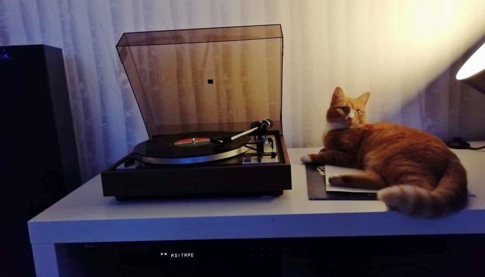 Oletko aivan puhki studiopäivän jälkeen? –Lue mistä väsymys johtuu ja kuinka voit sen välttää - Leila-kissakin sen tietää